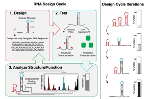 A_New_Paradigm_for_RNA_Engineering